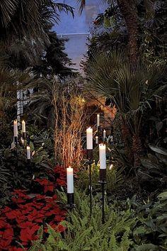 christmas outdoor flowers | Winter Garden Christmas flowers, Helsinki, ... | Christmas Around the ...