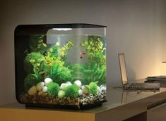 I want this aquarium in my home office. I think the gentle hum of the motor and water movement would help me write.