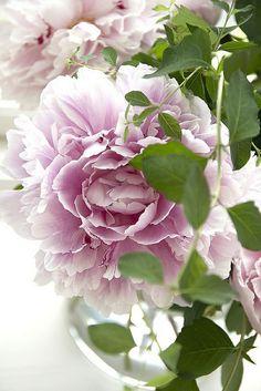 Heaveninawildflower: Photo