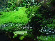 Opinions on the best vivarium moss? - Dendroboard