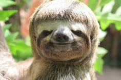 a sloth with a bowl cut