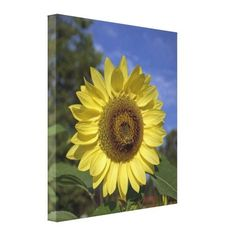 Bright summer yellow sunflower in blue sky stretched canvas print