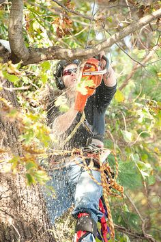 We are a locally owned and operated tree lopping and tree removal company bringing the very best in service to the good people of the Gold Coast. Tree Transplanting, Tree Pruning, Palm Tree Removal, Tree Loppers, Tree Specialist, Tree Removal Service, Stump Removal, Gold Cost, Tree Stump