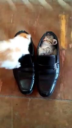 Cute Baby Cats Funny Kittens Videos - La mejor imagen sobre healthy recipes para tu gusto E - Cute Baby Cats, Funny Cute Cats, Cute Little Animals, Cute Cats And Kittens, Cute Funny Animals, Kittens Cutest, Cute Babies, Funny Kittens, Ragdoll Kittens