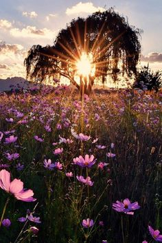 Nature photography landscape trees lights new Ideas Beautiful Sunset, Beautiful World, Beautiful Places, Beautiful Morning, House Beautiful, Beautiful Flowers, Photos Voyages, Nature Pictures, Life Pictures