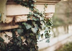 Old stone and ivy The Book Of Ivy, Shakespeare, Timothy Green, Hawke Dragon Age, Juliet Capulet, Captive Prince, The Secret History, Romeo And Juliet, Rapunzel