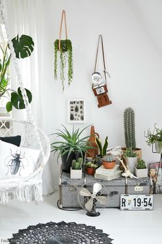Urban Jungle: Wohnen mit Grünpflanzen! Mit Lektüreempfehlung auf roomido.com #roomido #pflanzen