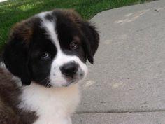 Matilda-As a Pup