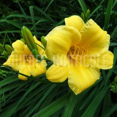 Garden Projects, Planting Flowers, Photos, Plants, English, Gardening, Country, Floral, Style