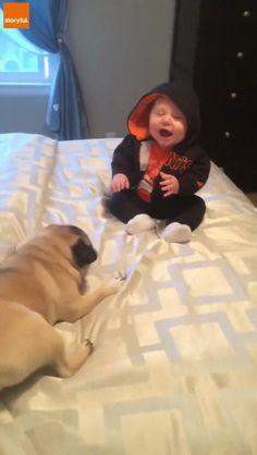 Pug  baby = a lot of giggles http://ift.tt/2fPbreZ