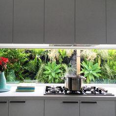 Vertical garden in frame behind kitchen splashback window.