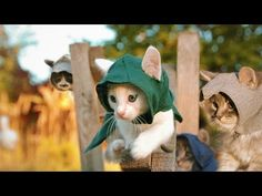 Assassin's Creed with Kittens =^_^=