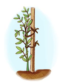 Learn about vertical gardening