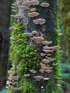 De nouvelles photos de champignons colorés par Steve Axford  2Tout2Rien