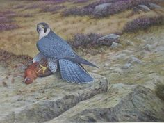 """Peregrine Falcon With Grouse"" -Falconry Original Art by R. David Digby…"