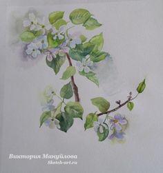 рисую ветки яблони