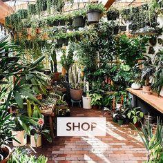 b36a4920a Pistils Nursery Garden Office, Earth, Organic Gardening, Plants, Plant,  Planets,