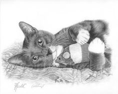 cat pet portrait drawing - Yahoo Image Search results