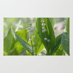 #prints #nature #flower pictures #light #office #free #shipping #today #arts #water #drops