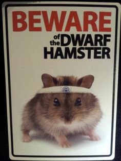 Beware OF THE Dwarf Hamster Sign Indoors Outdoors Rodent | eBay