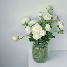 ranunculus - I love this flower - a little funkier than roses (but I love those too!).