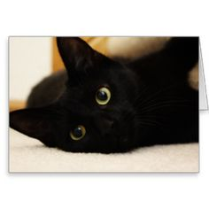 BroadmeadowCreative: Home | Zazzle.co.uk Store. An ever growing collection of all things cat.