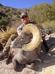 Hunting Big Horn Sheep