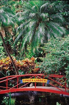 """Sunken Gardens, St. Petersburg One of the state's oldest """"theme parks,"""" Sunken Gardens opened in 1903. The four-acre botanical garden is now operated by the city of St. Petersburg. The park often hosts horticulture workshops, community events and even daily yoga classes."""