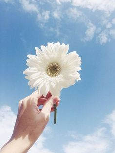 69 Ideas For Flowers Sun Girl Sky Aesthetic, Flower Aesthetic, Aesthetic Photo, Aesthetic Pictures, Hand Flowers, My Flower, Beautiful Flowers, Grunge Look, Flower Wallpaper