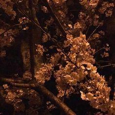 夜桜を見にきました ぶらぶら散歩もいいものだ