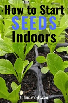 This complete guide to starting seeds indoors will give you all the tips you need to grow healthy, vibrant seedlings! Learn the best containers and soil to use, tips on how to germinate the seeds, proper watering and fertilizing and how to plant the seedlings in your garden! #startingseeds #howtostartseeds #trilliumliving Indoor Gardening Supplies, Container Gardening, Gardening Tips, Starting Seeds Indoors, Seed Starting, Planting Seeds, Organic Gardening, Vegetable Gardening, Backyard Landscaping