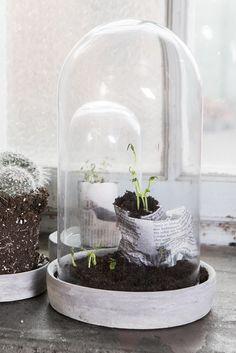 Glass house for kiddie plants Glass House, Ikebana, Basic Colors, Potted Plants, Garden Inspiration, Terrarium, House Plants, Flower Arrangements, Concrete