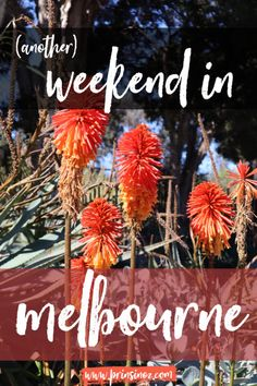 (Another) Weekend in Melbourne – Prins in Oz
