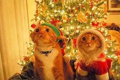 Uh Oh....They Saw Us!       BIG ELF kitty....little santa kitty :)  ~IRTI