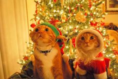 Uh Oh....They Saw Us!       BIG ELF kitty....little santa kitty :)  ~IRTI