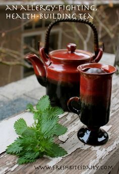 Stinging Nettle....This tea or infusion may knock out your seasonal allergies or may just keep you healthy | Fresh Bites Daily