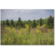 Trademark Fine Art Goldenrod Fence Canvas Art by Kurt Shaffer, Size: 12 x 19, Green