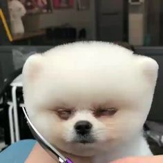 Funny Dogs Memes So Cute 59 Trendy Ideas