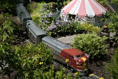 The Garden Railway at the Chicago Botanic Garden was full of dwarf and miniature conifers.