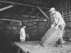 Throwing Hay; Wathena, KS; Agriculture at Work. LIKE, COMMENT, OR SHARE TO VOTE!