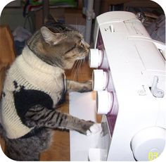 Sewing cats!