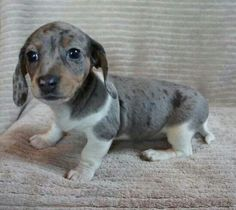 Omg!! I want this puppy.. So adorable!