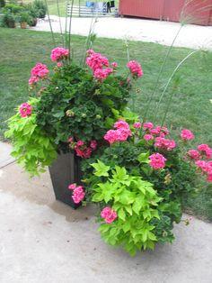 Summer Time: All you need is a Filler (Geranium), Thriller (King Tut Grass), and a Spiller (Sweet Potato Vine)
