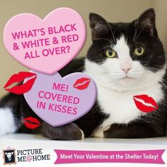 Picture Me @ Home has made February themed adoption campaigns available to shelters and rescue groups looking for great ideas. Read more here.