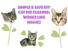 How to clean cat urine -  Easy, safe & natural DIY cat PEE remover - It ... #CatSprayingBakingSoda