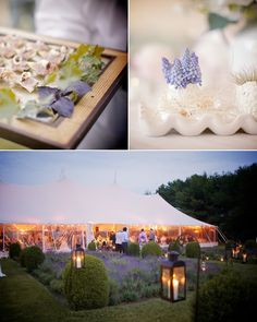 Bridge Gardens in Bridgehampton, New York... Love the lavender, though the tent way overscaled for our little wedding plans : )