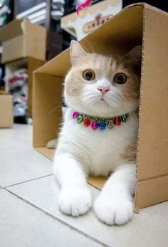 Kitty in a box ;)