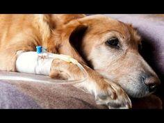 Características de la Oncología en Animales - TvAgro por Juan Gonzalo Angel