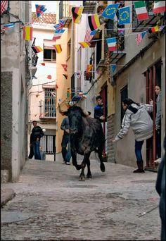 Infopalancia: Toros en Altura y Castellnovo