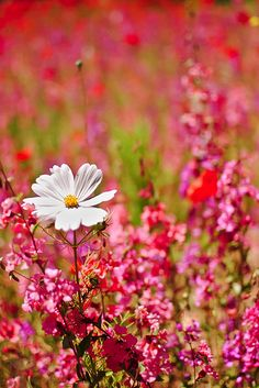 Beautiful Wild flowers https://play.google.com/store/music/artist?id=Aoxq3iz645k55co23w4khahhmxy&feature=search_result